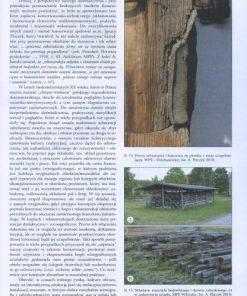 Konserwacja drewna zabytkowego - między teorią a praktyką