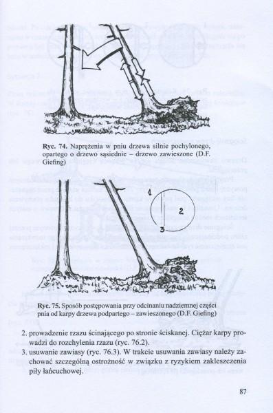 Użytkowanie w drzewostanach poklęskowych