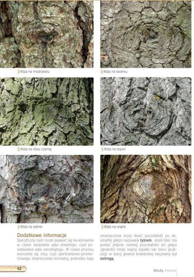 Wady drewna