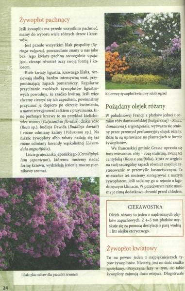 Żywopłoty - rośliny pnące i osłonowe