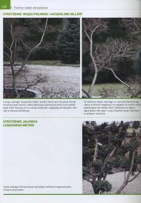 ciecie-roslin-ogrodowych.jpg-1