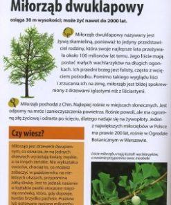 jakie-to-drzewo-1