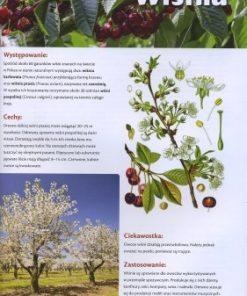 polskie-drzewa-lisciaste-i-iglaste